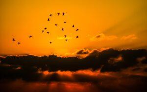 Arti Mimpi Burung Tafsirnya 1 Arti Mimpi