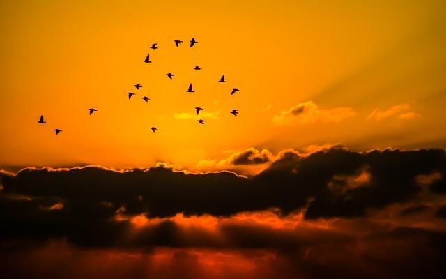 arti mimpi menangkap burung