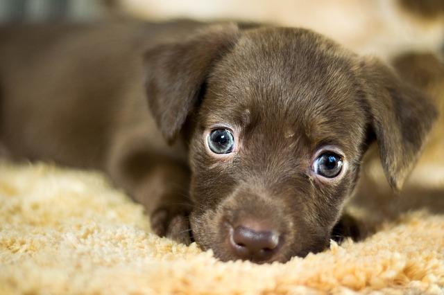 mimpi dikejar anjing