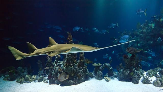 mimpi ikan hiu