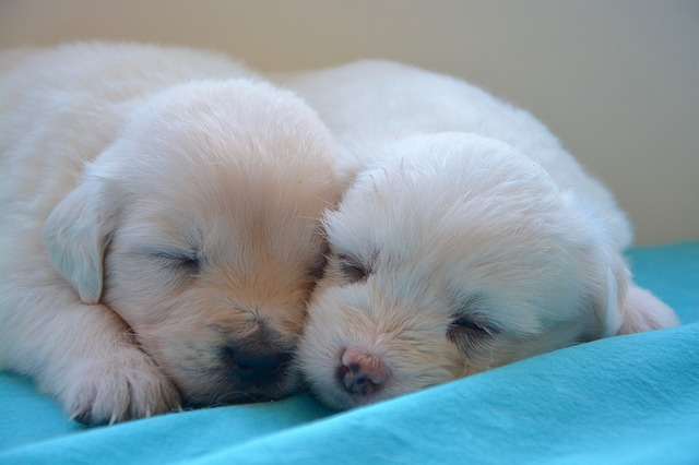 mimpi anak anjing