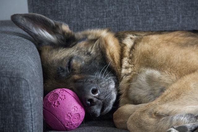 mimpi anjing mati
