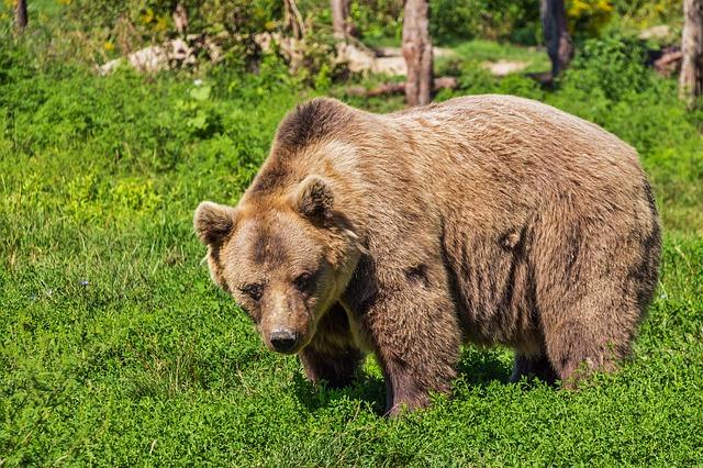 mimpi beruang apa artinya