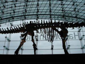 Arti Mimpi Dikejar Dinosaurus 1 Arti Mimpi