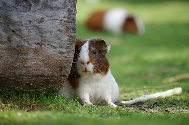 mimpi hamster