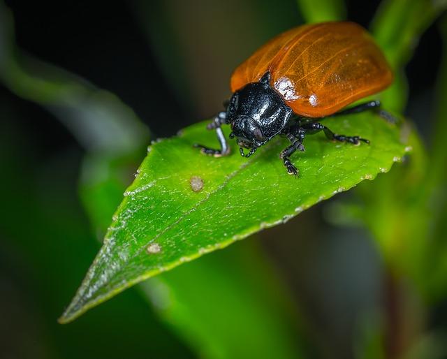 mimpi kumbang
