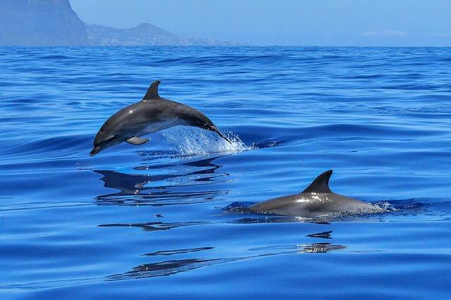 mimpi lumba-lumba