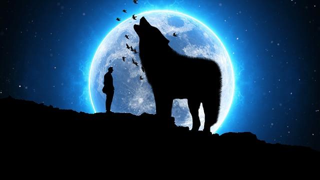 mimpi mendegar serigala