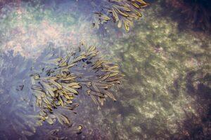 arti mimpi rumput laut
