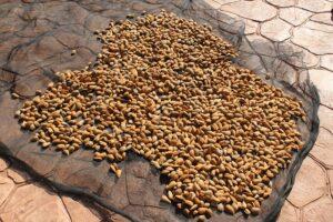 mimpi kacang almond