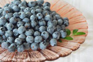mimpi buah blueberry
