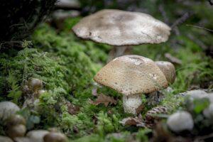 mimpi jamur di tanah