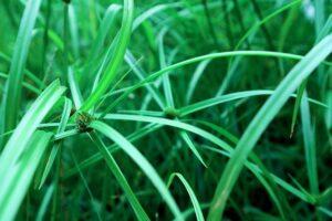 mimpi menyabit rumput