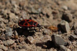 mimpi dikerubungi serangga