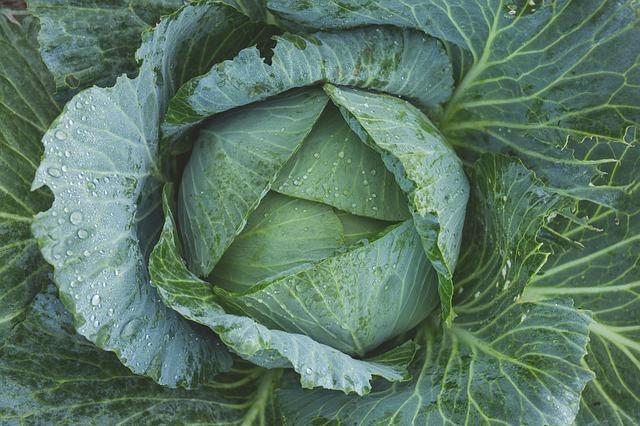 mimpi sayuran