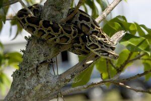 mimpi ular