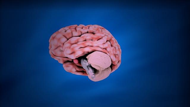 cara kerja memori otak